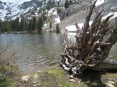 201607_0037 (GSEC) Tags: anseladamswilderness california ferncreek fernlake inyonationalforest sanjoaquinmountain sierranevadamountains unitedstates