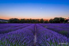 Tombe de la nuit (Fabienne G) Tags: banon lavande summer night nuit landscape paysage provence canon 5dmarkiii