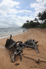 anini beach (1600 Squirrels) Tags: 1600squirrels photo 5dii lenstagged canon24105f4 beach driftwood aninibeach northshore kauai kauaicounty hawaii usa tonemapped