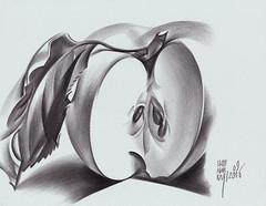 Яблочный спас (ПЯТНИЦКАЯ) Tags: яблоко урожай осень рисунок карандаш графика apple autumn graphic graphite pencil