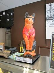 Brixham One Eyed Jack Cat (Bridgemarker Tim) Tags: cats brixham coffee cafes felines pussies