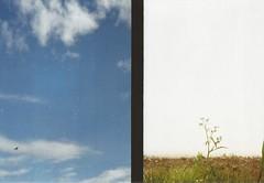 (surilane) Tags: olympuspenees2 olympus kodak kodakproimage film shootfilm 35mm 35mmphoto filmphoto halfframe givefilmachance filmisnotdead