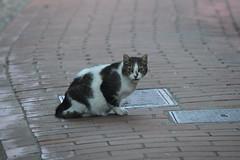 montemarcello (dinapunk) Tags: montemarcello italy liguria cat