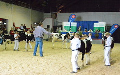 Interior Provincial Exhibition & Rodeo (james.watt44) Tags: armstrongbc 4h shuswapdairy4h dairycows dairycattle dairy ipe interiorprovincialexhibition interiorprovincialexhbitionrodeo cows calves calf fair shuswap4hdairy