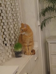 Et dehors il se passe quoi ? (So_P) Tags: chat cat microbe katze
