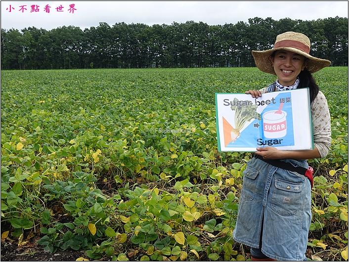 川野農場 DIY採玉米 (9).JPG