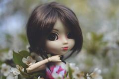 A memory of spring (Dragonella~) Tags: pullip coco doll alte groove obitsu pullipobitsu pullipcoco flower cherry nature dragonella nikon d5100