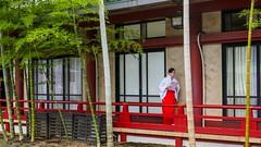 Witch busy with a wedding Tokyo Hieda-shrine (sapphire_rouge) Tags:  hiedashrine     japan tokyo wedding
