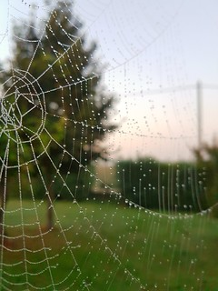 ...the spider webs become visible....