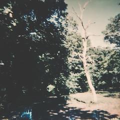 * (eli,michelini) Tags: polaroid vintage film immediato mano braccio donna fogliame quercia natura progetto buono iver morbido per ritratto