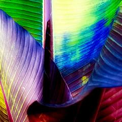 .... (a.penny) Tags: fuji fujifilm finepix x10 apenny square quadrat 1x1 500x500 leafe blatt pflanze plant