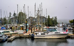 Ucluelet Boat Basin (Small Craft Harbour) (spetersonphotography) Tags: ucluelet uclueletinlet ukee westcoast westcoastvancouverisland vancouverisland britishcolumbia canada nikond5200 nikon 2016 boats ships vessels equipment fishingboats fishing fishingtrawler fishboats fishboat pier docks wharf inlet ocean pacificocean crabnets gear uclueletboatbasin smallcraftharbour harbour