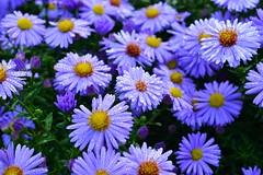 It' s beautiful outside (daniiSfotografie) Tags: blumen flower naturfotografie mothernature morgentau nature blumenfoto