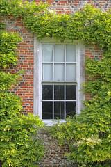 Wisteria Window (meniscuslens) Tags: vyne national trust wisteria window hampshire