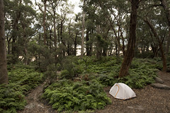 Alone in Paradise Camp Site (dan_walk) Tags: sealers cover camp site campsite wilsons prom promontory national park victoria australia ferns green tall trees paths dirt tent silver grey overcast forest woods plants nature outdoors kathmandu brand gear brown explore adventure exploremore more