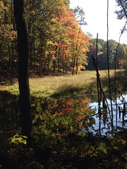 Katie Arwood (North Country Trail) Tags: hike100nct mi michigan puremichigan naturalmajesty natural majesty friends family dogs nct northcountrytrail beauty forests valleys coastlines waters experience wonders getoutside exploremore findyourpark nps100 celebrate hiking hike