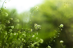 Green Nature (Felix Schmidt Photography) Tags: lighting light sun sunlight plant flower color colour detail green nature colors beautiful beauty grass yellow contrast canon germany creativity outdoors happy eos 50mm freedom focus colours dof angle bokeh outdoor pov path details joy perspective ground center dreams balance middle 18 contrasts elegance saxonyanhalt 60d erdeborn