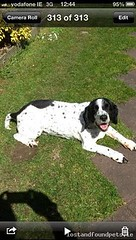 [Reunited] Fri, May 3rd, 2013 Lost Female Dog - Assumption Road, Athlone, Westmeath (Lost and Found Pets Ireland) Tags: road dog lost may assumption westmeath 2013 lostdogassumptionroadwestmeath