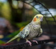 ZON_0074 (Zonnie) Tags: nikon d600 sigma 35 f14 sb700 dof bokeh closeup parrtos birds wildlife animals