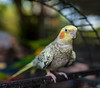 ZON_0074 (Zonnie) Tags: nikon d600 sigma 35 f14 sb700 dof bokeh closeup parrtos birds wildlife animals