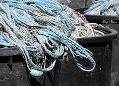 le filet de pche - fishing net (png nexus) Tags: bleu blue nb bw desaturation