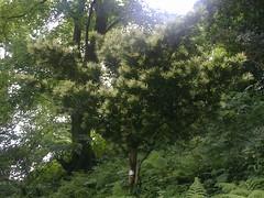 Botanical_Garden_Batumi (9) (Sasha India) Tags: travel georgia journey jardimbotnico botanicalgarden jardinbotanique batumi   gorgie excurso acara    adjara      botanikbahesi         grcstan        nbatatba          acarstan sfr