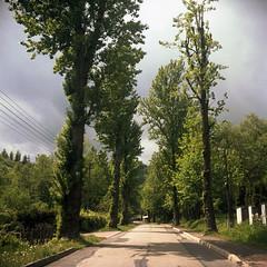 Bielsko-Biaa, Poland. (wojszyca) Tags: wzfo start 66 tlr 120 mediumformat 6x6 gossen lunaprosbc kodak portra 160 epson 4990 trees road
