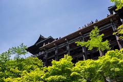 Kiyomizu-dera (Pikaglace) Tags: sony a7 kyoto japan japon trees temple religion religious height blue sky spring rables printemps arbres verts kiyomizudera