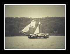 Tall Ship (ildikoannable) Tags: mono bw ship tallship sail olympus lumix