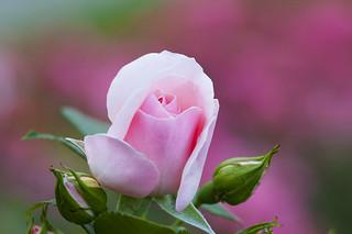 Bloemen. Flowers.. 003