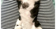 Kitten belly: rubs welcome. via http://ift.tt/29KELz0 (dozhub) Tags: cat kitty kitten cute funny aww adorable cats