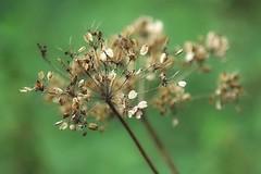 Un soupçon d'automne (mamietherese1) Tags: magicunicornverybest world100f earthmarvels50earthfaves