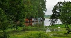 Le Nivernais est un pays d'eau (Thierry.Vaye) Tags: nevers nivernais bourgogne cygne eau cabanon pche cabane verdure