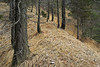 The path (natural illusions) Tags: tree trees pine rural forest pentax k200d rawtherapee imagemagick slovenia europe nature walking landscape outdoor plant leaf leaves slope grass branches zen wildness path woodland lb1415 interesting allrightsreserved