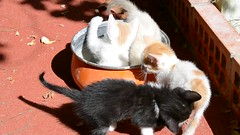 Gatitos a la cazuela (Emilio J. Rodrguez-Posada) Tags: gatitos gatito gato gata gatita gatitas cat cats olla cazuela
