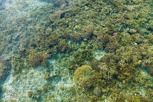 kanawa island see thru corals