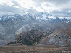 Larch and fir forest (David R. Crowe) Tags: landscape mountain nature outdooractivities scrambling kananaskis alberta canada