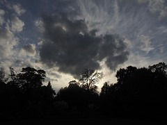Sky (katieMai) Tags: sky trees clouds dark sillouette blue photography nature