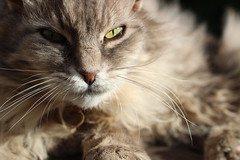 Oliver-Bambi (wingsofescape14) Tags: cats animals pets animal photgraphy