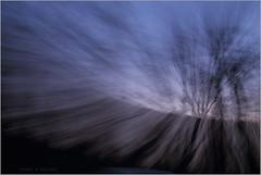 woods .. (nevil zaveri (thank you for 10 million+ views :)) Tags: zaveri wilderness nature gujrat india photography photographer images photos blog stockimages photograph photographs sagai jungle forest navsari gujarat nau nevil nevilzaveri stock photo trees zoomburst