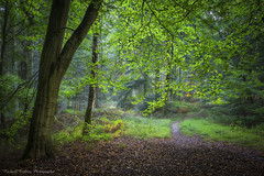 Where The Path Divides (Chalky666) Tags: tree trees wood woodland forest footpath westsussex southdowns painterly art landscape