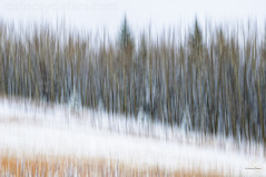 Winter in October (Quincey Deters) Tags: 2016 alberta allrightsreserved autumn beige blurredmotion brown canada colourimage country elkislandretreat fall field flora grass green horizontal icm intentionalcameramovement landscape layers lines morning nature neutral northamerica october orange outdoor overcast rural snow tree treeline white winter yellow quinceydeters