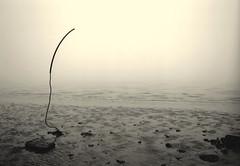 Niebla en el ro (eduardoplacidovazquez) Tags: fl