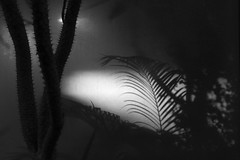 Untitled (Yuta Ohashi LTX) Tags: plant silhouette monotone contrast shadow    botanical garden greenhouse   black white monochrome bw nikon  d750 24120mm f4