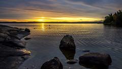 Early Bird (Jens Haggren) Tags: olympus em1 morning sun sunrise sky clouds colours water sea seascape landscape rocks trees bird light nacka sweden