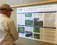 Poster presentation on mugwort (Jay Heritage Center) Tags: uconn connecticut jayheritagecenter lhprism cipwg 2016 education outreach landscape environemental stewardship emerging species threat habitat wildlife invasiveplants invasive control mugwort mile minute japanese knotweed bmp management ct ny ma