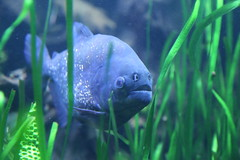 1439 (William Sc) Tags: fish water aquarium