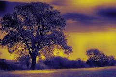 Le mani dellalbero hanno le unghie sporche di azzurro a furia di scavare dentro il cielo (Gianni Armano) Tags: le mani dellalbero hanno unghie sporche di azzurro furia scavare dentro il cielo colori ottobre 2016 foto gianni armano photo san giuliano nuovo alessandria piemonte italia per flickr