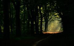 The clearing (Nils van Rooijen) Tags: clearing glade woodland sun forest stuwwal nijmegen hoge hoenderberg groesbeek sunrays shadow autumn fall netherlands nature outdoor