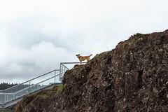 Fuerte de Niebla (Marthaqr) Tags: niebla chile outdoor animal nature cloud landscape dogs stonework architecture